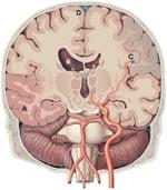Glucose Homeostasis (5)
